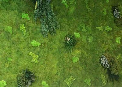 musgo preservado jardines verticales naturales hortus vertical jardineria