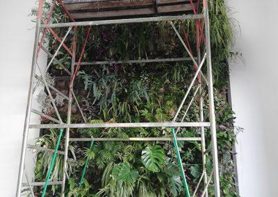 Mantenimiento de Jardines Verticales - Hortus Vertical