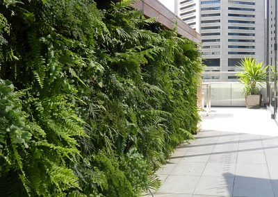 Green Wall in Sydney