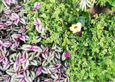jardines verticales naturales 02