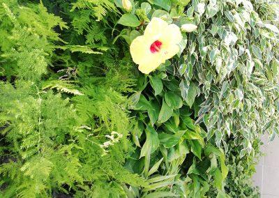 jardines verticales naturales 04