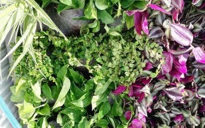 Evitar las humedades en un jardín vertical